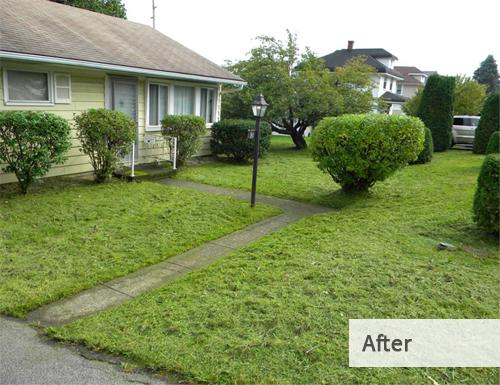 J.J. Sinisi Lawn Care After